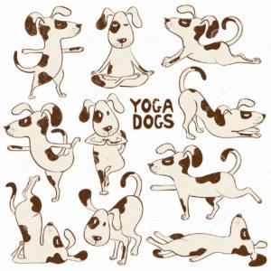 Zwierzęca yoga